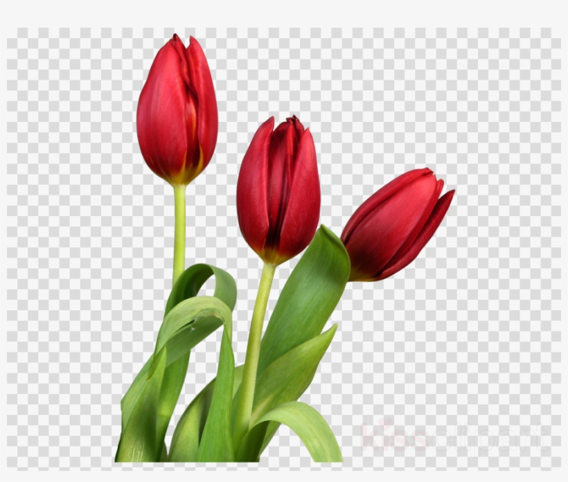 Download Good Morning With Beautiful Flowers Clipart Beautiful