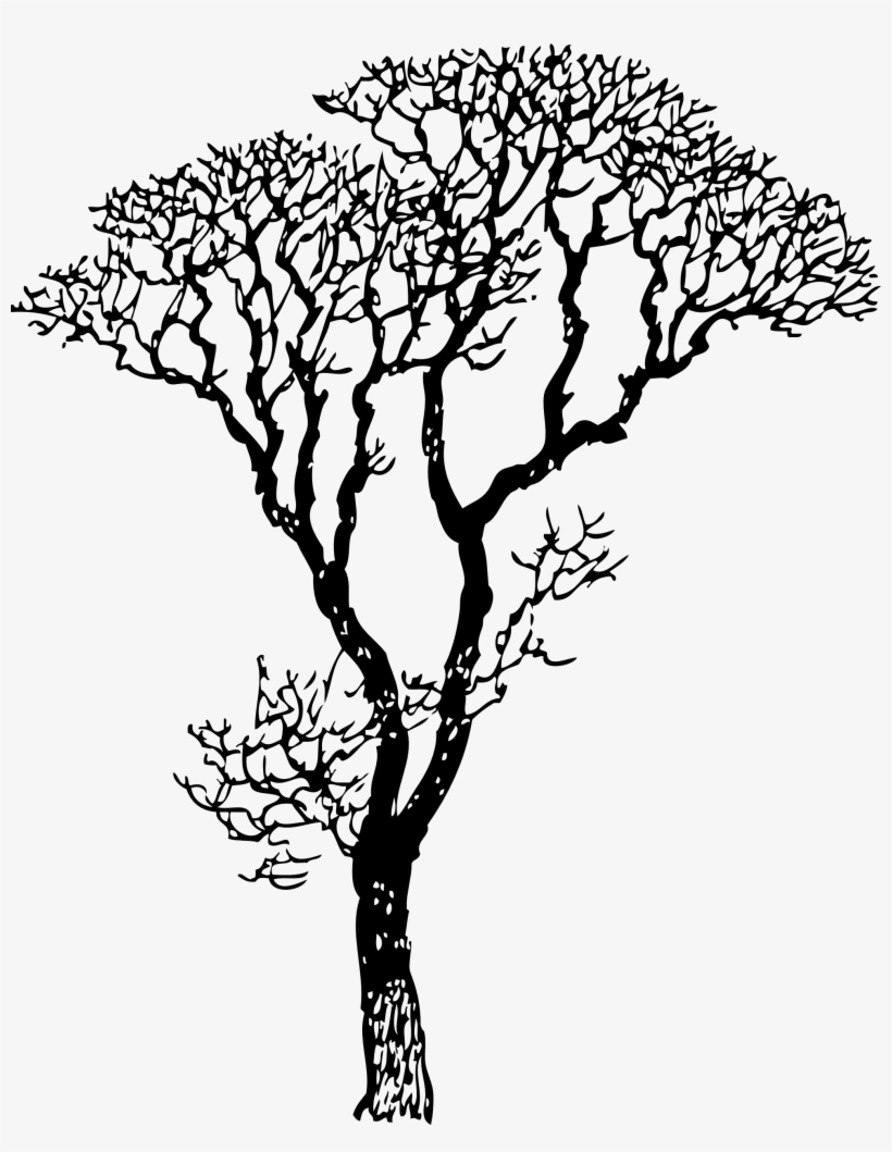 Branch Clipart Jungle Tree Branch - Black And White Clip Art Tree Trunk Tree, transparent png #490217