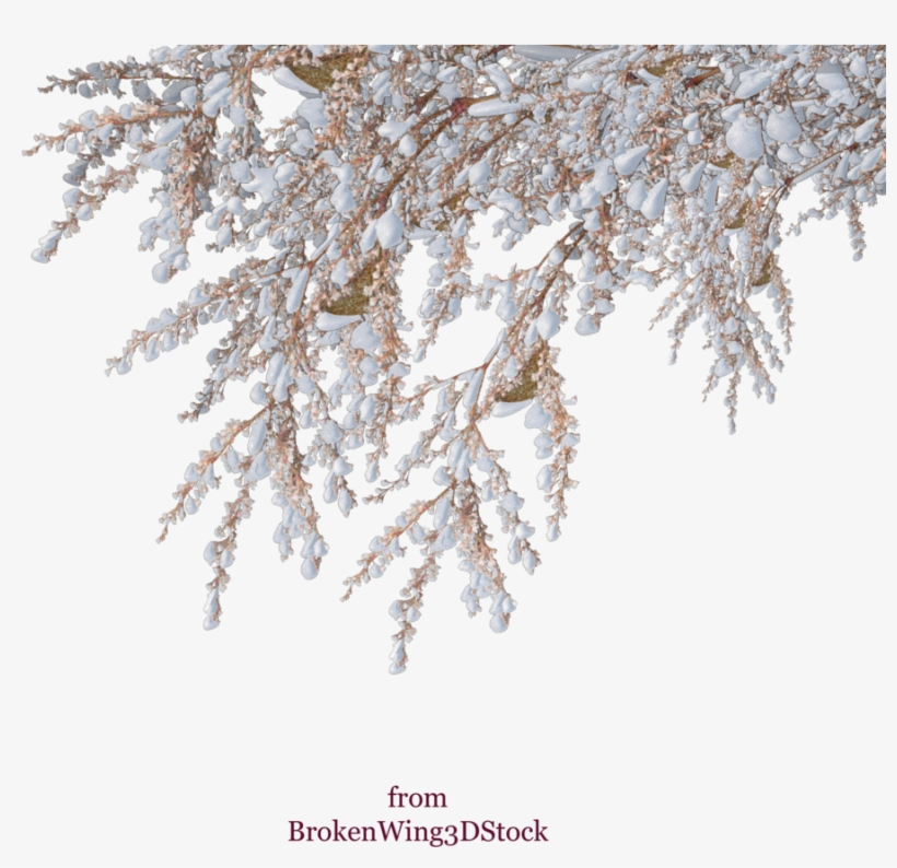 Vector Snow Winter Shrub Tree - Snowy Tree Branch Png, transparent png #490356
