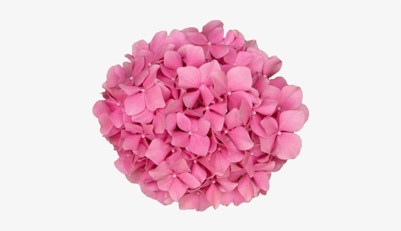 Coolest Transparent Flower Background Transparent Flowers - Bunch Of Pink Flowers Png, transparent png #499431