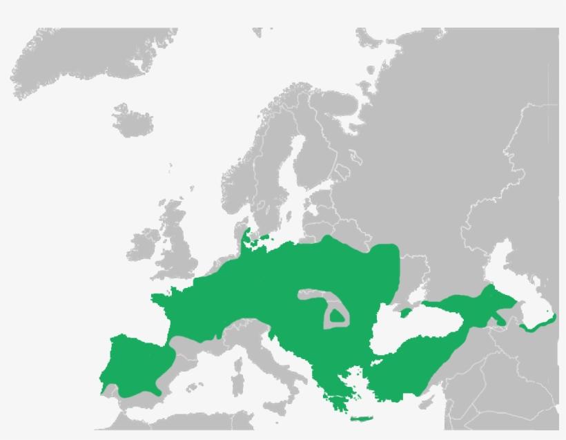 European Tree Frog, transparent png #4902554