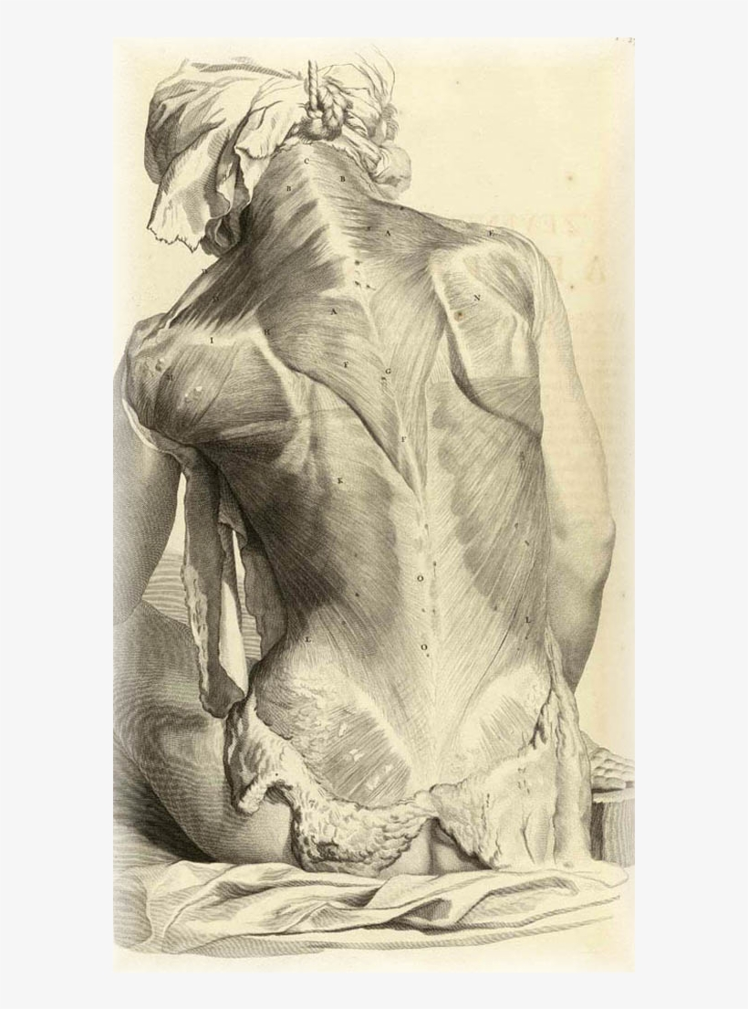 Banner Stock Anatomy Drawings Wearearamis Stuff - Gerard De Lairesse Anatomy, transparent png #4962818