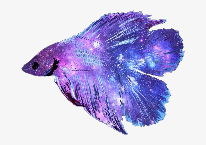 Picture Freeuse Stock Betta Fish Clipart - Betta Fish Transparent Background, transparent png #4983845