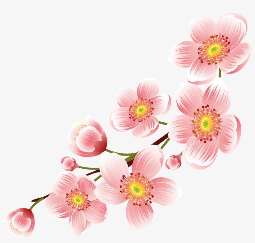Cherry Blossom Png Transparent Background - Cherry Blossom Flower Png, transparent png #50499