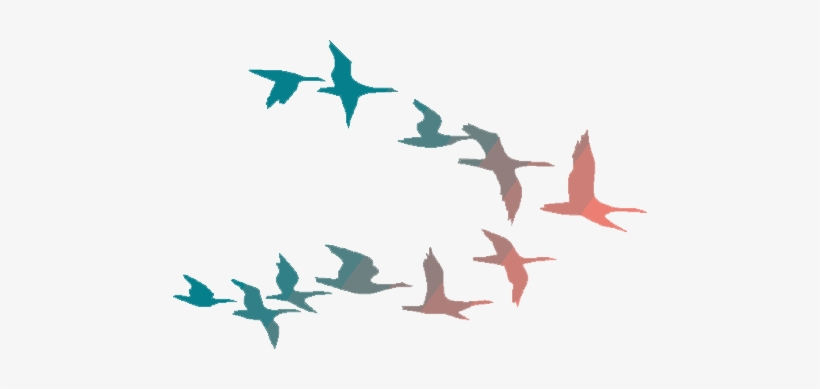 Flying Birds Png Png Library Download - Colorful Flying Birds Png, transparent png #51408