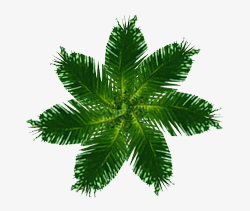 Palm Tree Plan View Png - Free Printable Housewarming Invitation Cards, transparent png #52168
