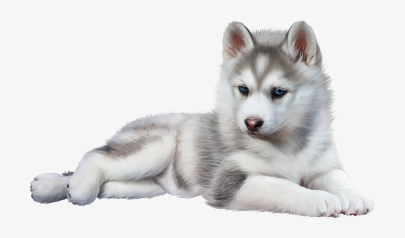 Wolf Baby - Baby Husky Png, transparent png #53499