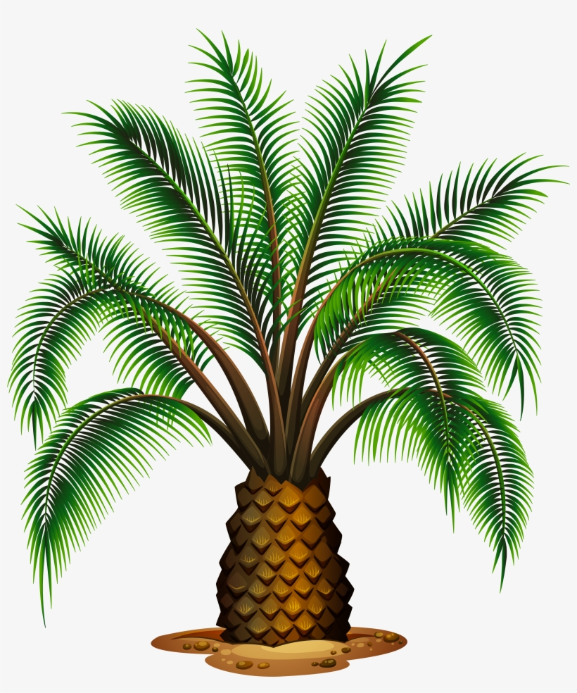 Palm Tree Clipart Pineapple Tree - Different Types Of Palm Trees, transparent png #54777