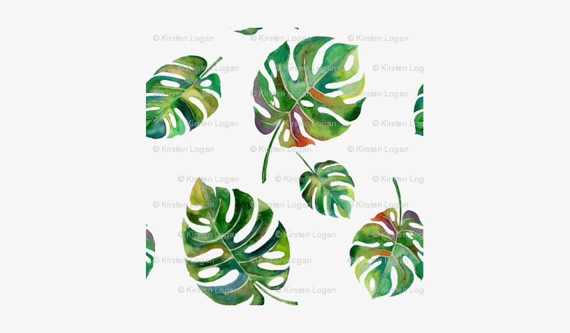 Tropical Island Palms Palm Leaves Watercolor - Swiss Cheese Plant Vector, transparent png #59873