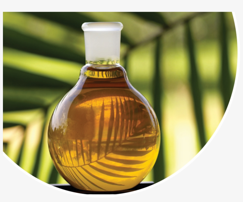 Palm Oil Png - Palm Oil No Background, transparent png #504683