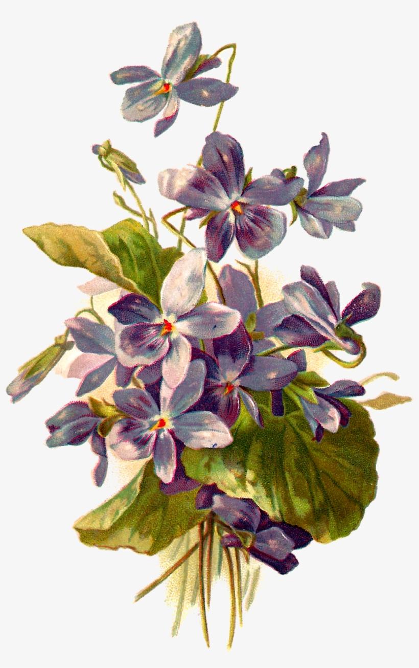 French Postcard Of Violets, - Violet Flower Botanical