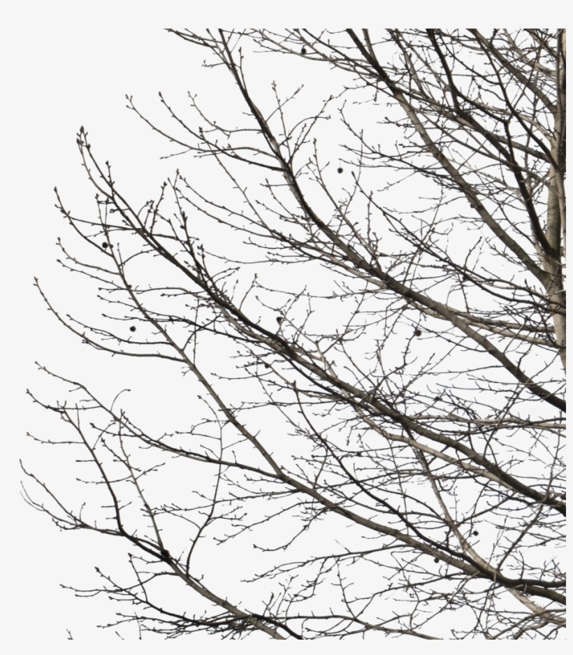 Deciduous Tree Winter I - Deciduous Tree Image Winter Transparent Background, transparent png #5097941