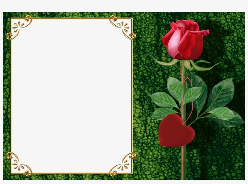Fotoeffekt S Kategorii Rose Frame Photo Editor Free Transparent Png Download Pngkey