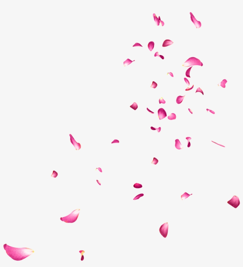 Falling Rose Petals Png Picture - Flower Images Editing, transparent png #5167170