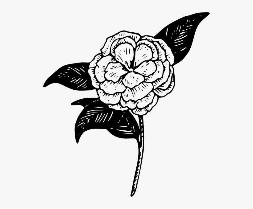 Png Royalty Free Library Confusing Drawing Purity - Camellia Flower Clip Art, transparent png #5189505