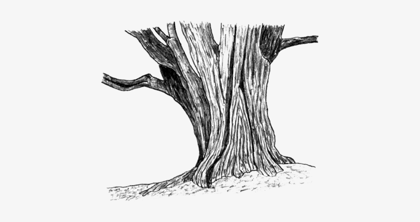 Svg Stock Drawing Woods Tree Trunk - Tree Stump Sketch Png, transparent png #520246