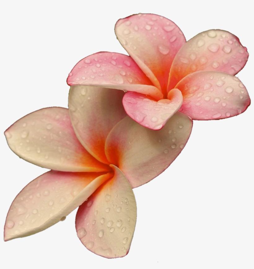 Png Flowers Flower Lovely Rajon - Rare Unique Beautiful Flowers, transparent png #5226254
