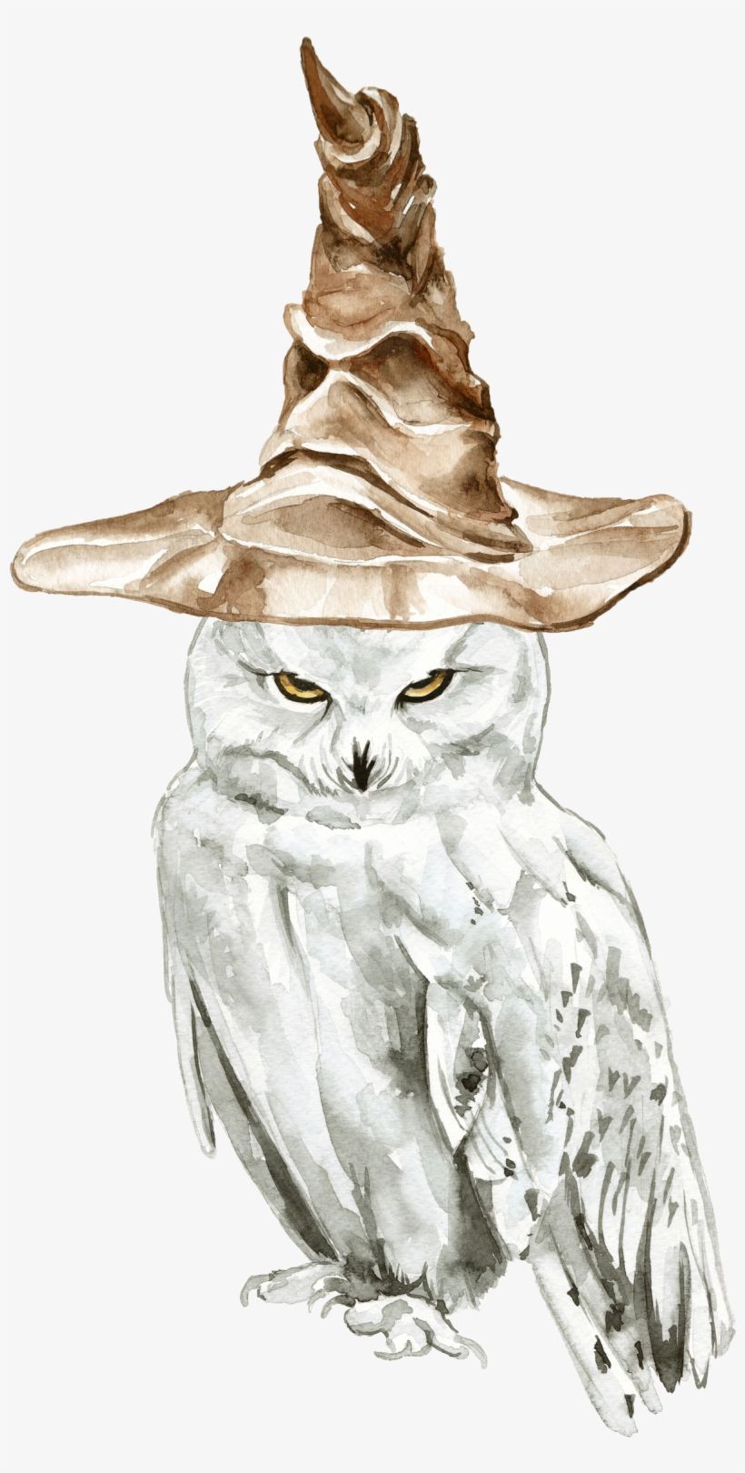 Snowy Owl Harry Potter Drawings Free Transparent Png Download Pngkey