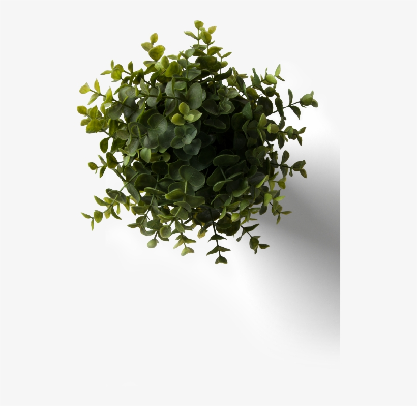 Flower Plant Top View Png With Flower Plant Top View - Table Plant Top View Png, transparent png #544058