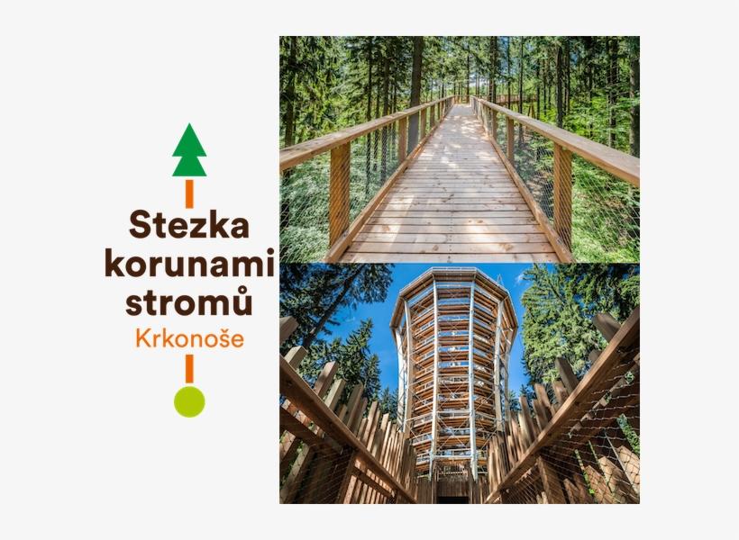 Tree Top Walkway In The Krkonoše Mountains Canopy Walkway
