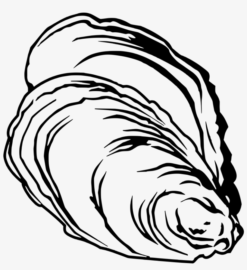 Jpg Freeuse Clam Clipart Pearl Drawing - Free Oyster Vector, transparent png #5456160