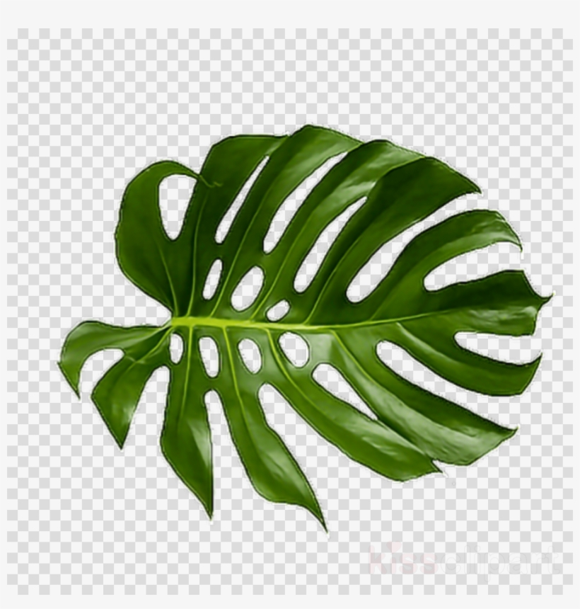 Tropical Leaf Png Clipart Palm Trees Leaf Clip Art - Tropical Palm Leaf Png, transparent png #5483507