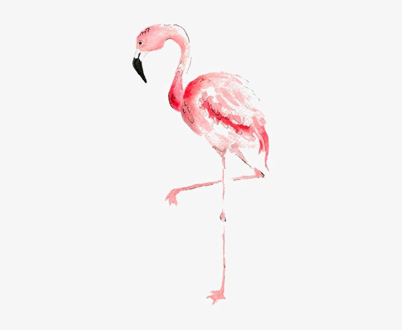 Flamingo Watercolor Painting Transprent Banner Black - Watercolor Flamingo Transparent Background, transparent png #555660