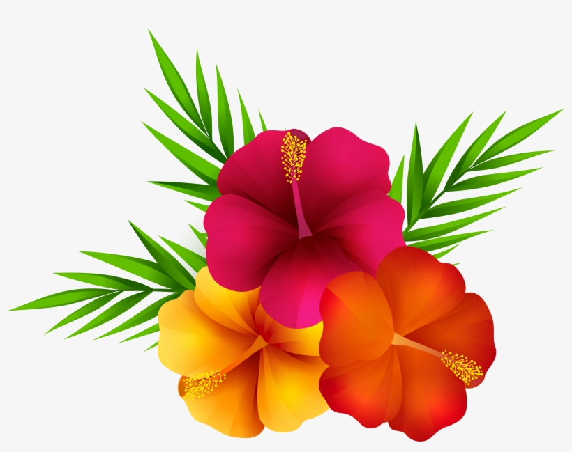 Exotic Flowers Png Clip Art Imageu200b Gallery Yopriceville - Tropical Flowers Transparent Background, transparent png #558016