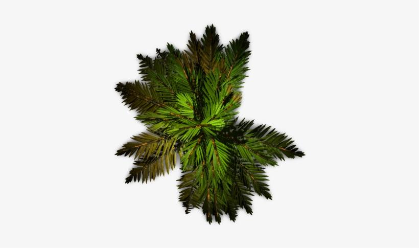 Palm Tree Plan Png, transparent png #558020