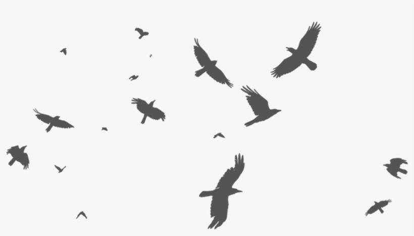 Birds - Stock Photography, transparent png #562252
