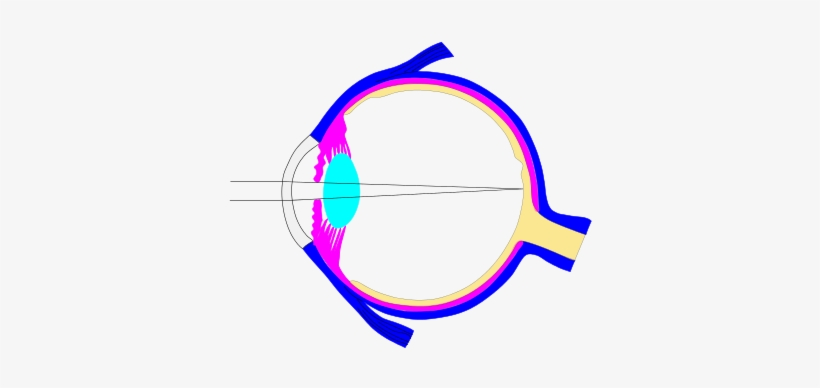 This Is An Inkscape Document With Different Layers - Human Eye, transparent png #567201