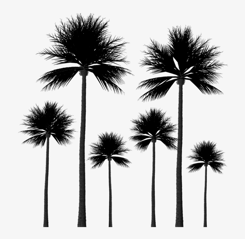 15 Palm Tree Silhouettes Png Transparent Background - Palm Trees Group Png, transparent png #569680