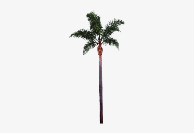 Free Png Palm Tree Png Images Transparent - Palm Tree Trunk Png, transparent png #569708