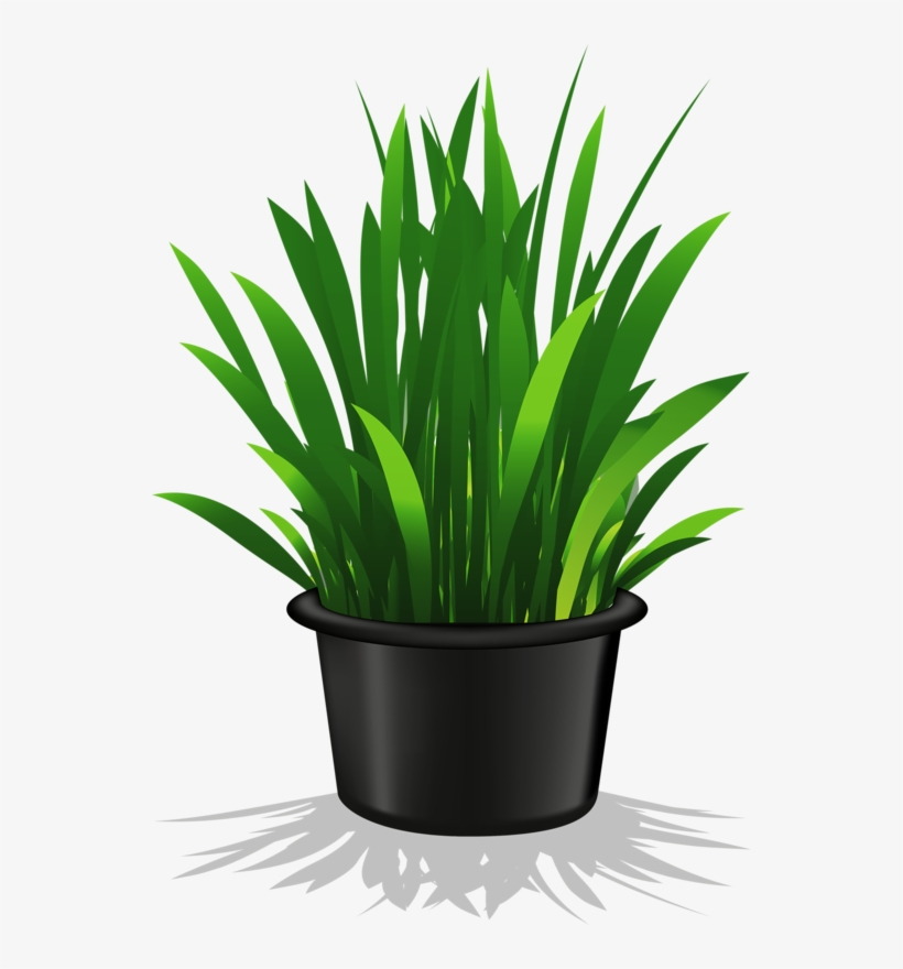 Image Freeuse Flower Pots Clipart Potted Plant Clip Art Transparent Free Transparent Png Download Pngkey