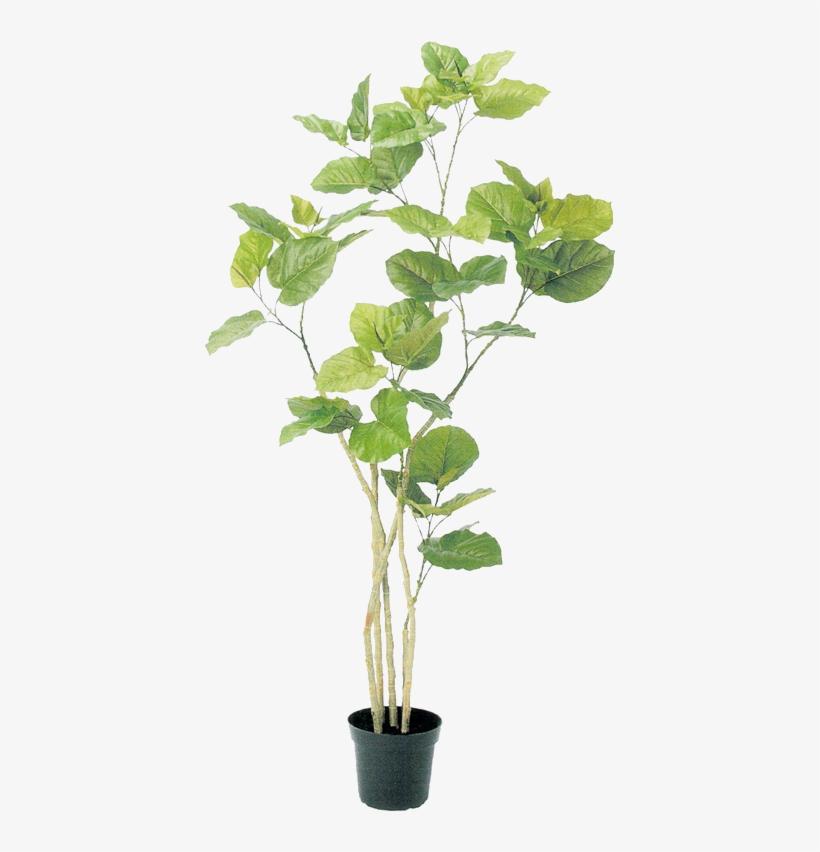 0 Tree Psd, Plant Illustration, Botanical Illustration, - Plants In Pots Photoshop, transparent png #584534
