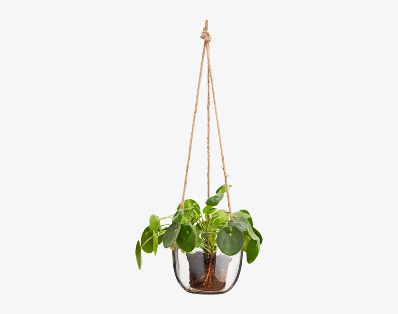 Hanging Glass Plant Pot - Hanging Flower Pots Png, transparent png #585147