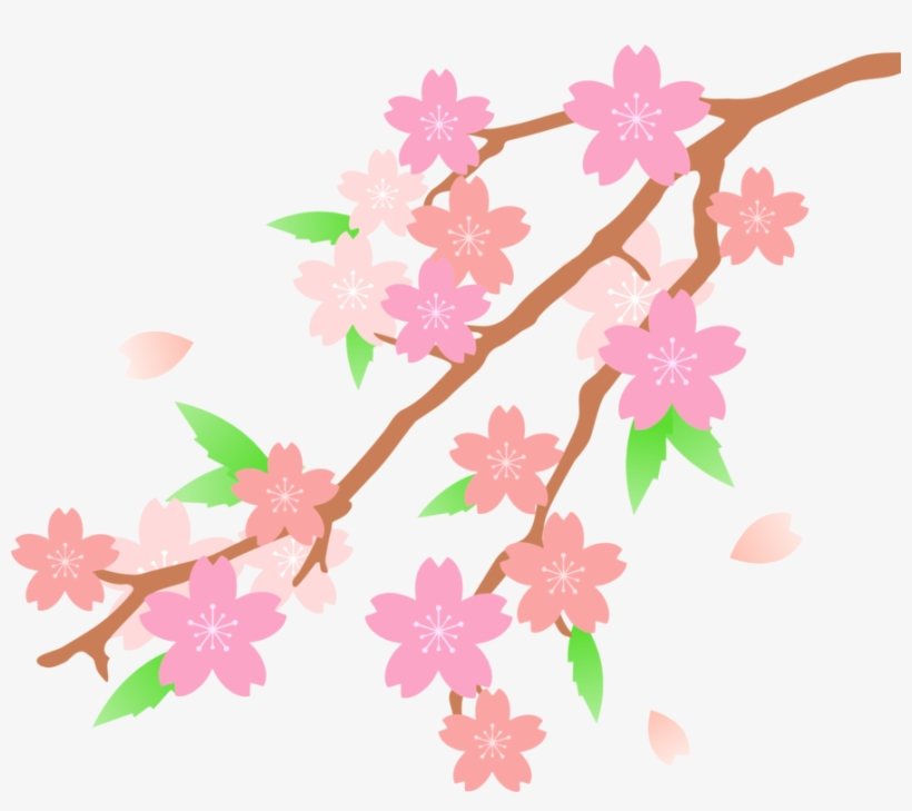 Cherry Blossom Drawing Flower - Cherry Blossom Clipart, transparent png #586635
