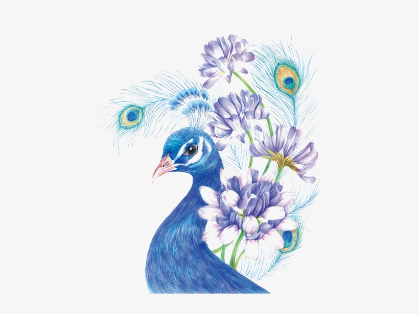 Drawing Colored Pencil Painting Sketch - Coloured Pencil Drawing Birds, transparent png #588256