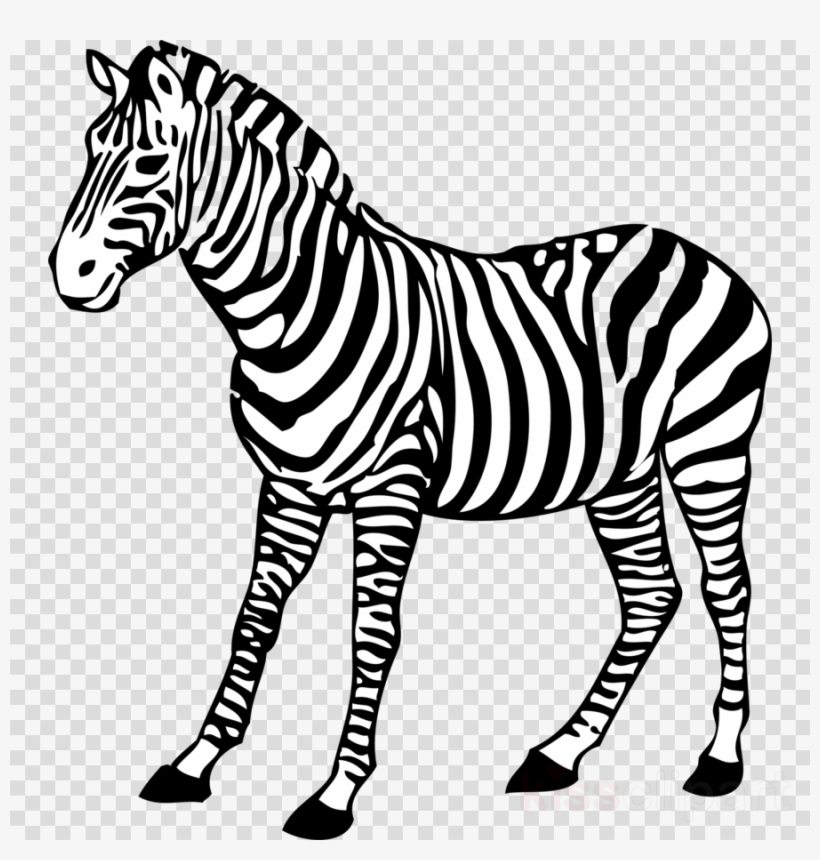 Zebra For Coloring Clipart Coloring Book Baby Zebra - Colouring ...