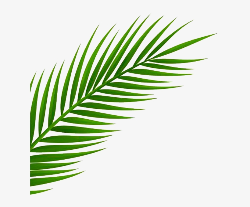 Inspired By A Recent Trip To Miami By Our Creative - Palm Leaf Png Free, transparent png #5827832