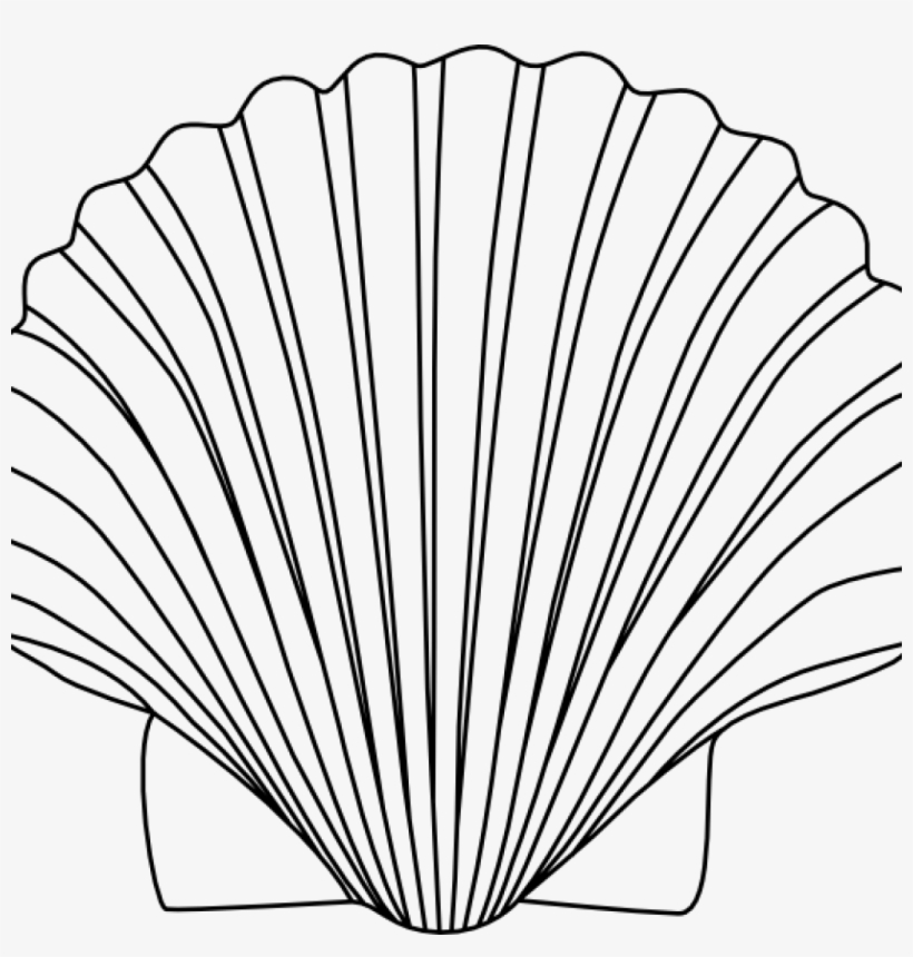 Shell Clipart Shells Clipart Black And White For Free