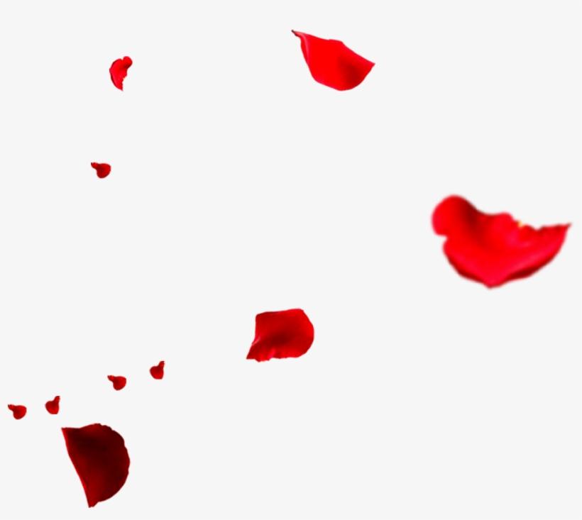 Rose Flower Petals Falling Transprent Png Free - Falling Rose Petals Png, transparent png #5956814