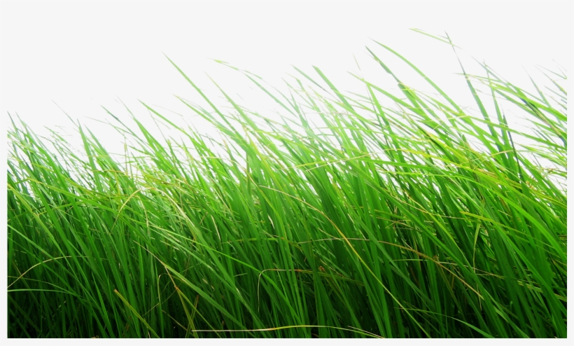 Cb Editing Flower Grass Png - Grass Png Transparent Background, transparent png #60523