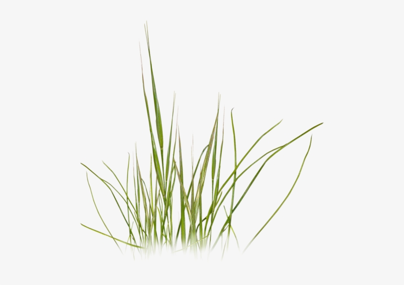 Grass Photoshop, Photoshop Texture, Photoshop Design, - Beach Grass Clip Art, transparent png #61834