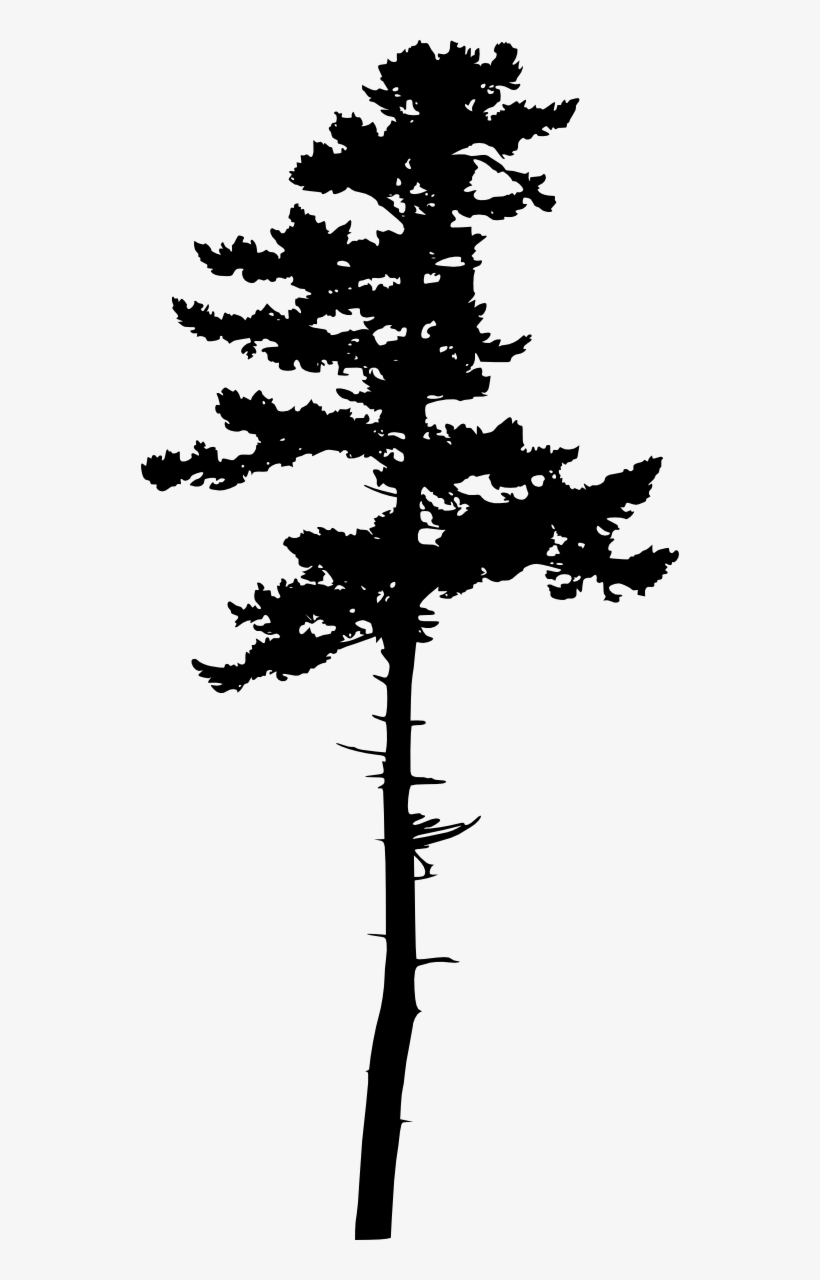 Tree Silhouette Transparent - Jack Pine Silhouette, transparent png #62170