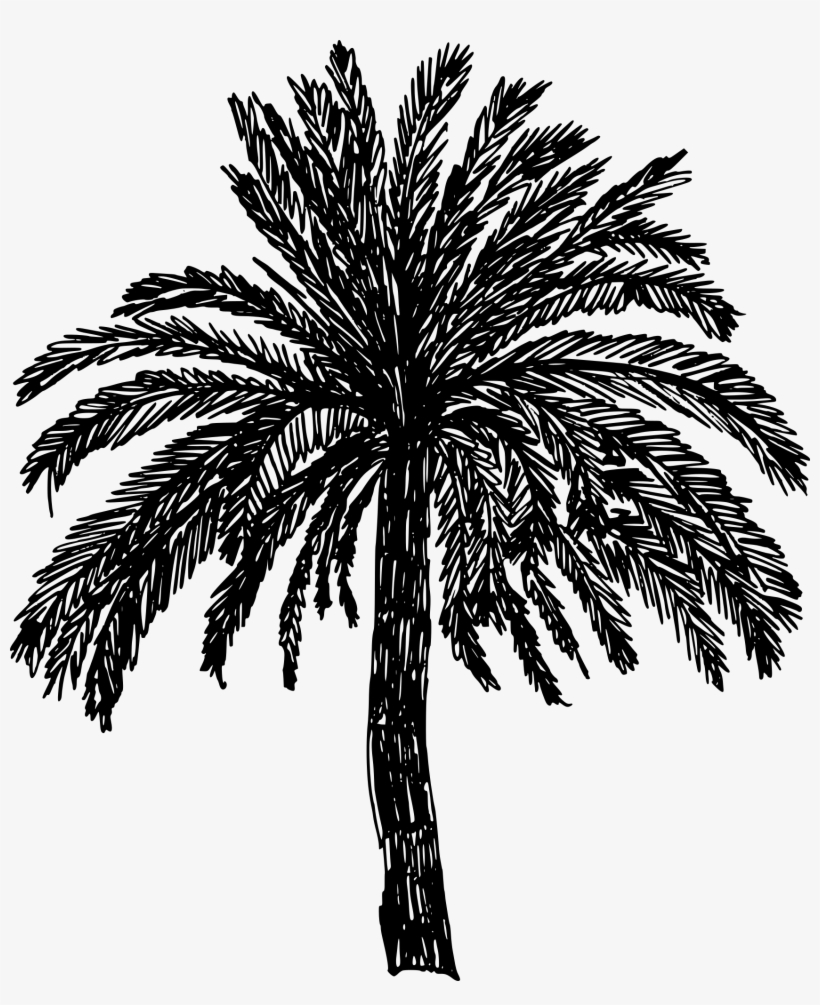 Jpg Black And White Stock Crayons Drawing Palm Tree - Tree Drawing Png, transparent png #62451