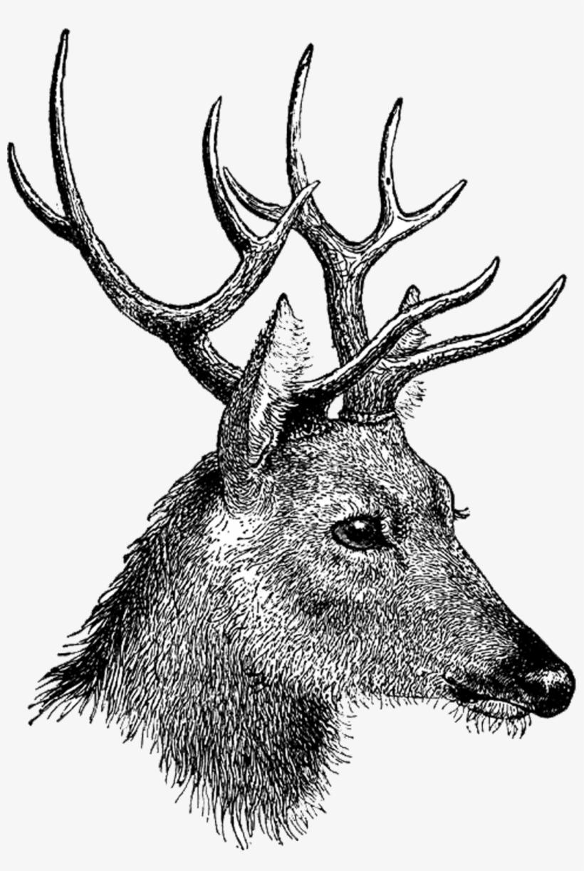 Vintage Deer Head - Stag Head Drawing Side, transparent png #62785
