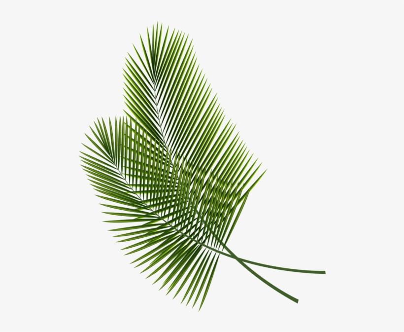 Tropical Leaves Clipart Image - Tropical Leaves Clip Art, transparent png #62987