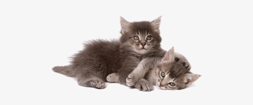 Picture Free Library Taking Care Of A Kitten - Cat And Kitten Png, transparent png #63697
