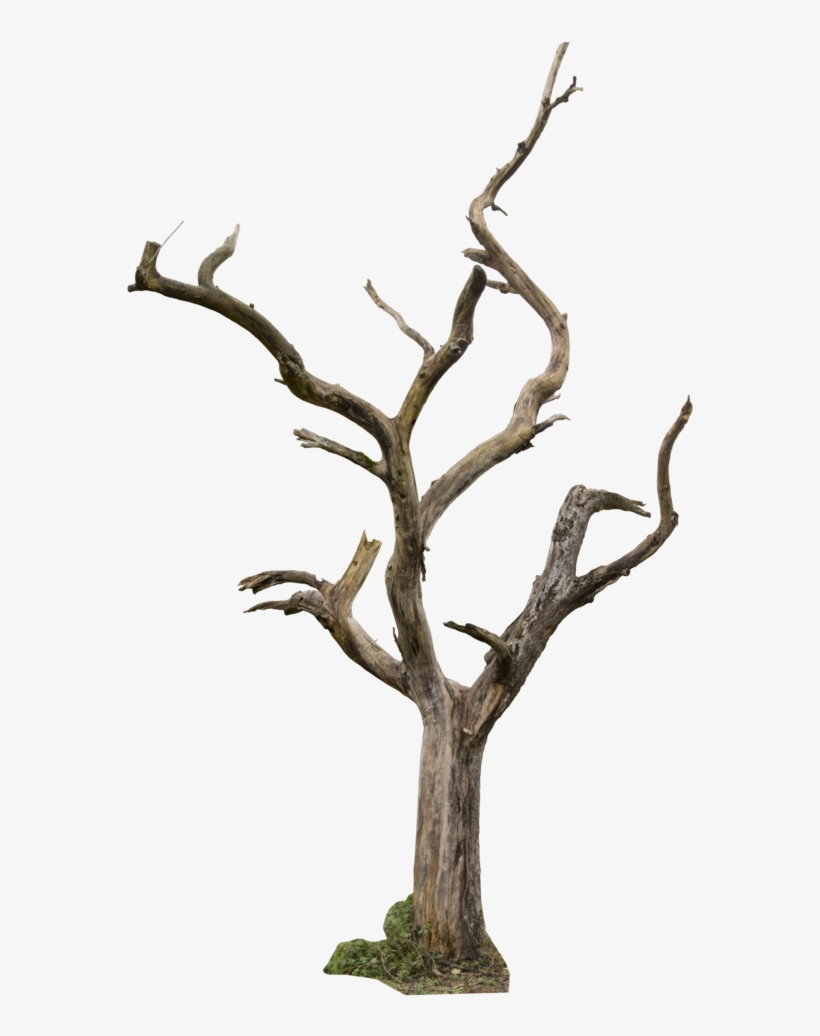 Dead Tree 04 By Gd08 - Dead Tree Png - Free Transparent PNG Download